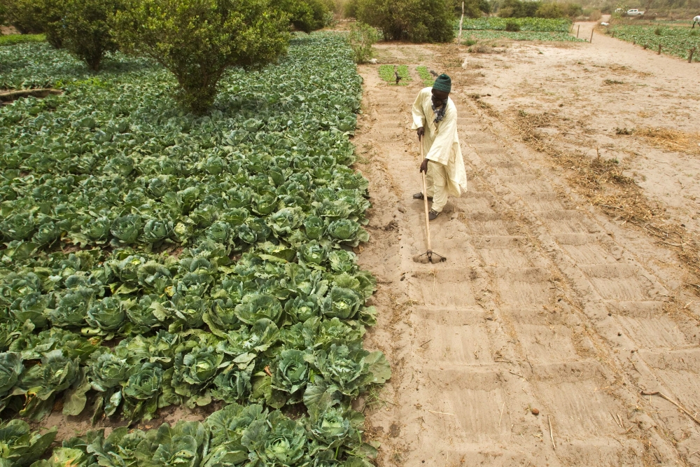 New soil productivity programme launched by FAO for Africa
