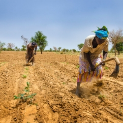 Hunger in the Sahel is a 'looming disaster'